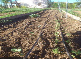curso-agricola-elche